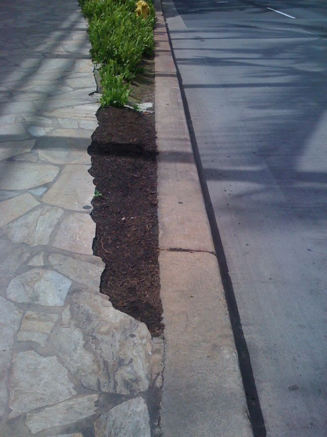 2-weeks-later-10-11-mulch-filled.jpg