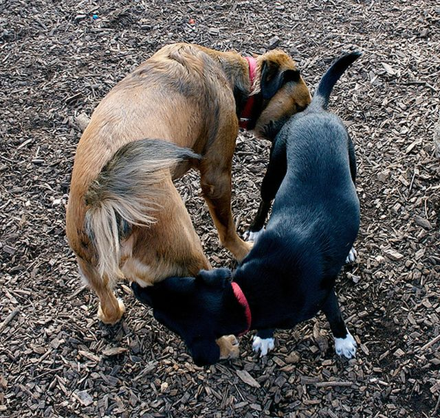1-dog-greeting.jpg