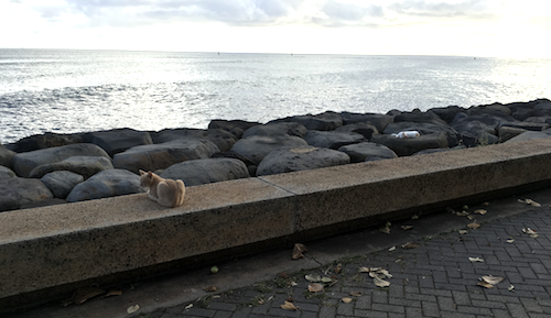 4-cats-on-the-rocks.png
